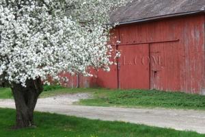 apple blossom barn