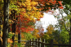 fall fence