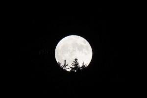 moonlight in VT