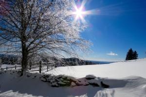 fine winter day