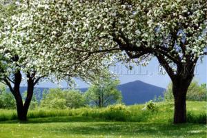 haystack in bloom