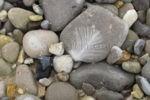 feather & stones